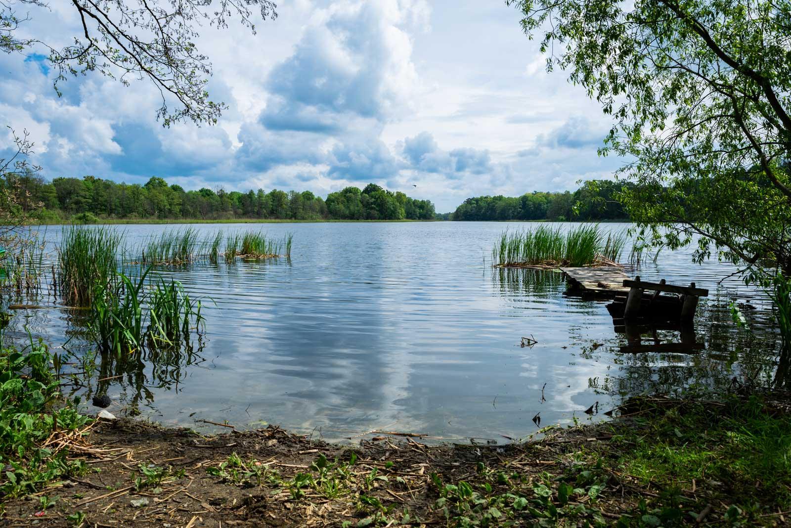 Zdjęcie współczesne widok na jezioro szymbarskie z północno-zachodniego brzegu. Fotografia wykonana w pochmurny dzień, na niebie widoczne wyraźne wielowarstwowe chmury, które odbijają się w tafli jeziora. Zdjęcie wykonano z żabiej perspektywy, na jego pierwszym planie widzimy skrawek trawiastego brzegu jeziora, po prawej stronie zdjęcia widać zawalony pomost dla wędkarzy, jezioro porastają nieliczne skupiska tataraku. W oddali widać przeciwległy brzeg jeziora oraz drzewa nad jego brzegiem.